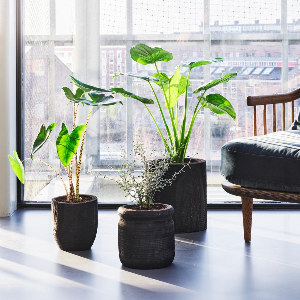 Dit hebben planten nodig om goed te groeien   vtwonen plantencollectie