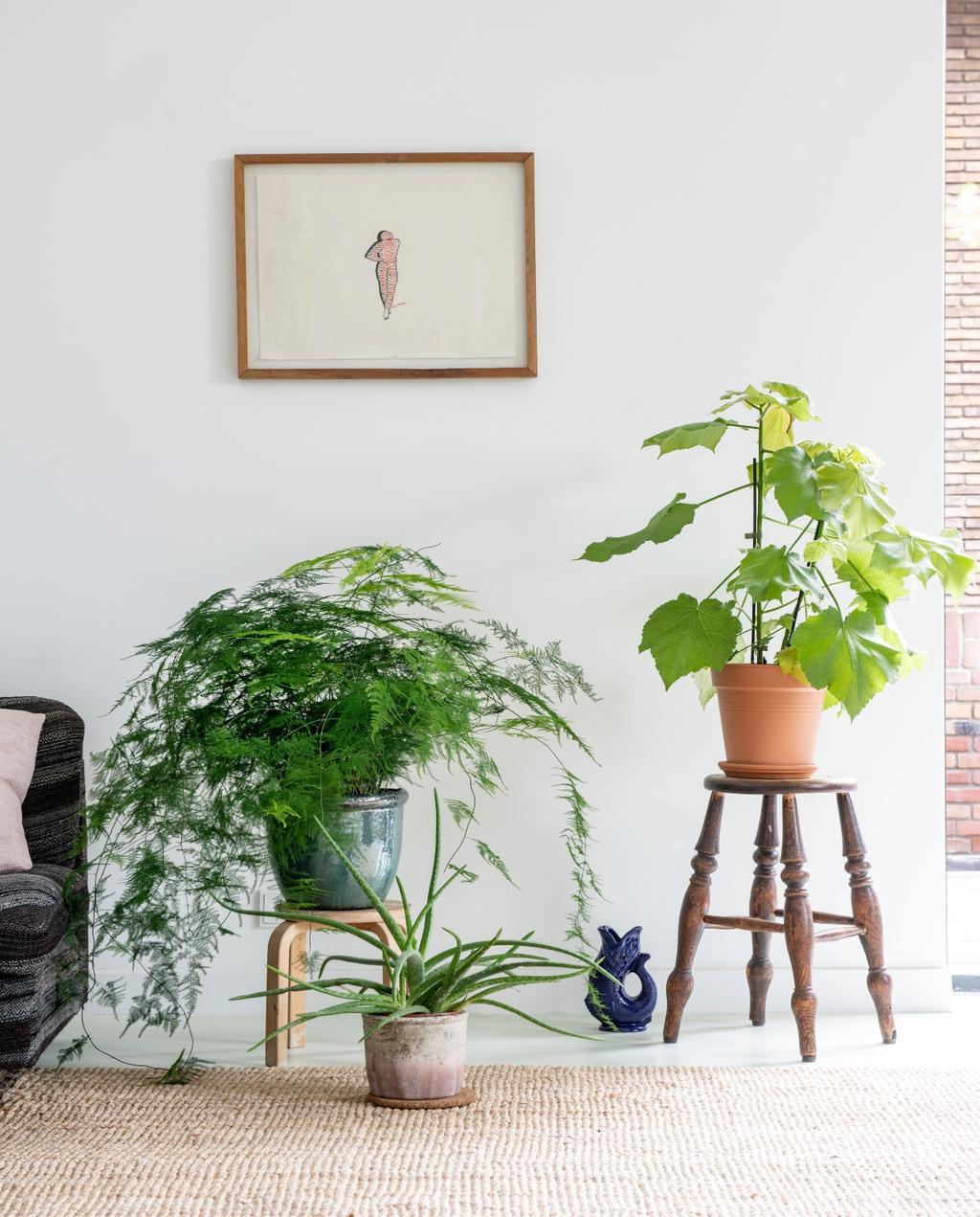 vtwonen binnenkijken 03-2020 | binnenkijken Amsterdam planten op plantenstandaard