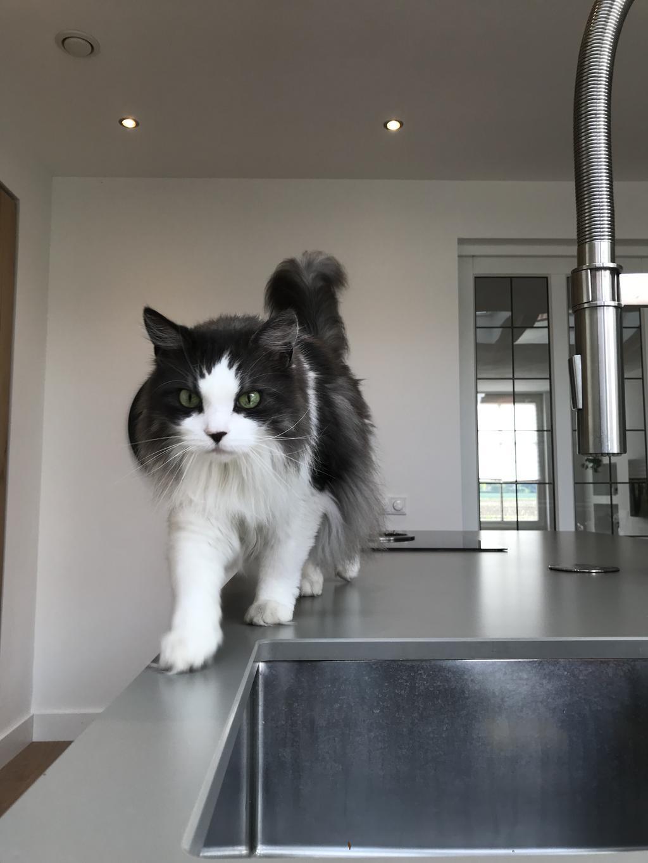 de-baas-in-huis-onze-kat-bink-vindt-dat-het-kookeiland-van-hem-is