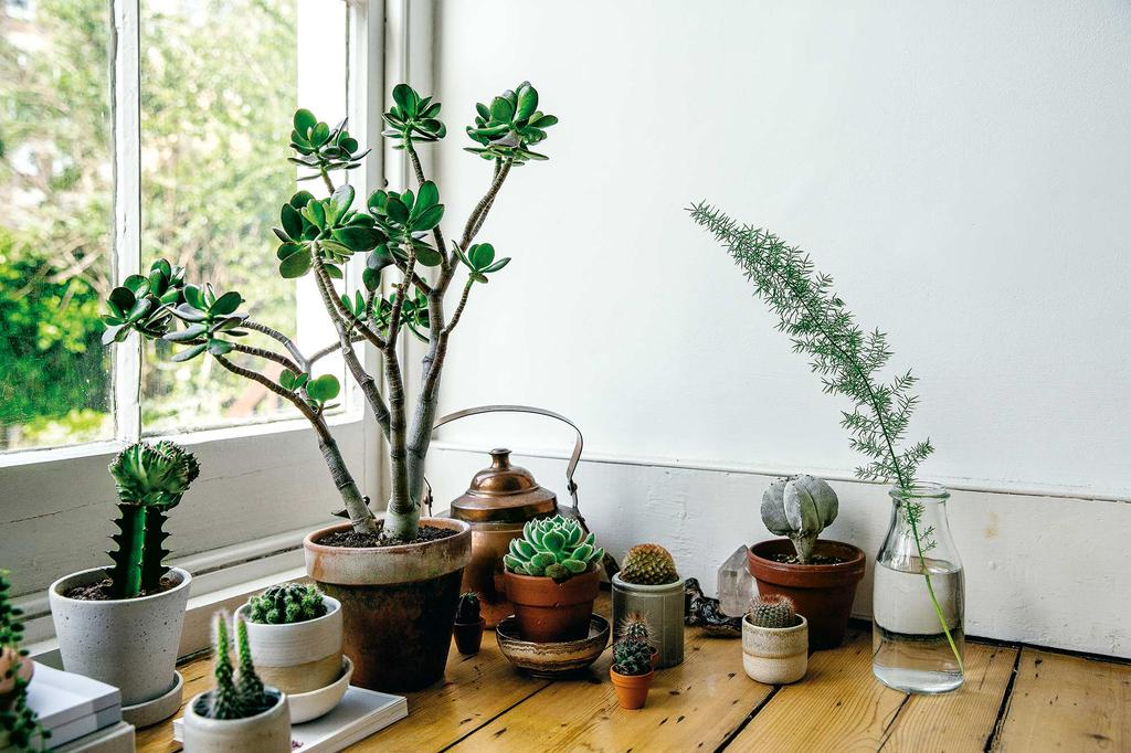 wonen met planten groenboek