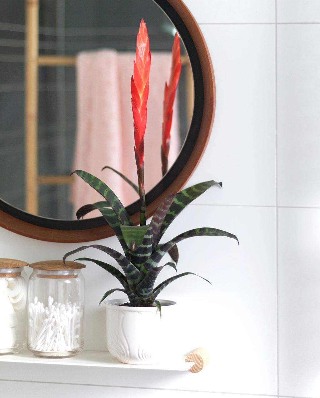 Deze planten overleven in een ruimte zonder licht