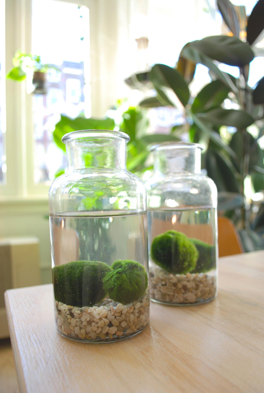 tuinieren mosballen in fles