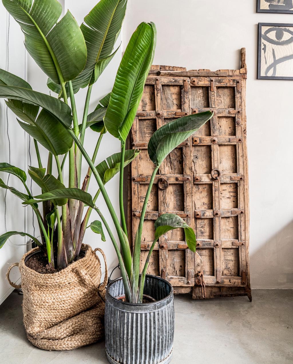 vtwonen binnenkijken special 2019 | plant gedecoreerde wand