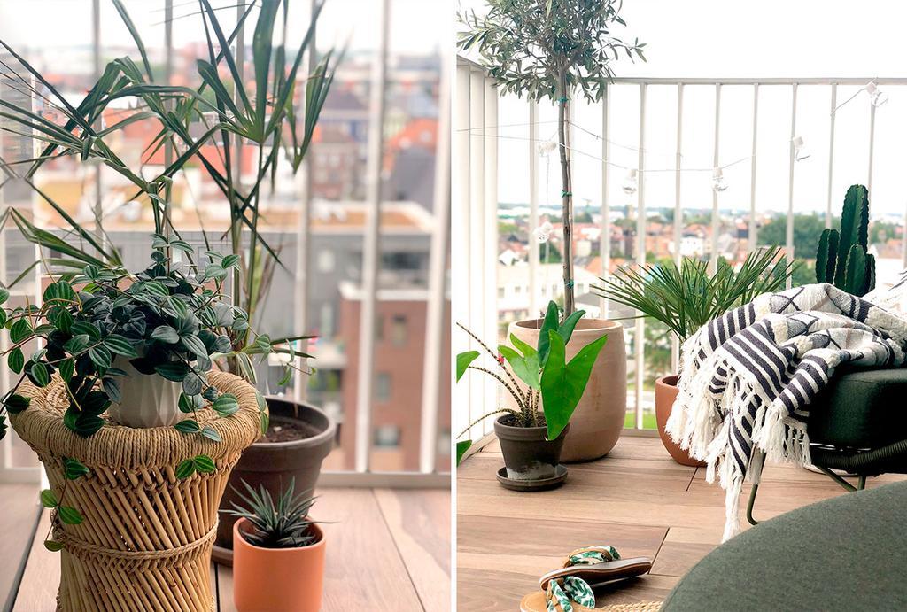 Een collage met foto's van een balkonmet planten en een stoel met een dekentje.