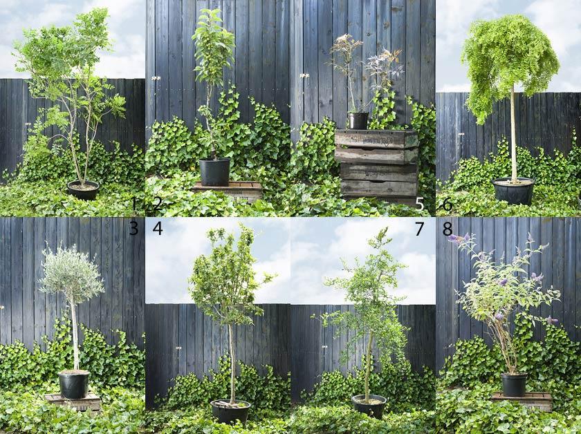 Kleine bomen in pot