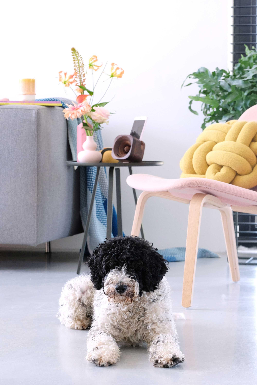 trobla design hond