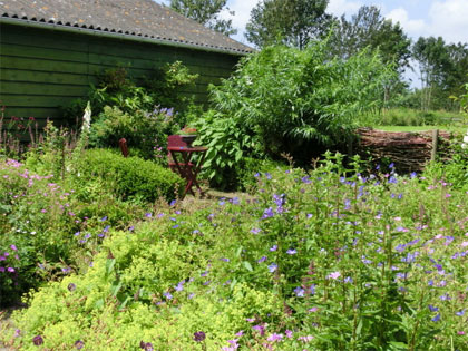 Kijktuin: natuurlijke cottage tuin