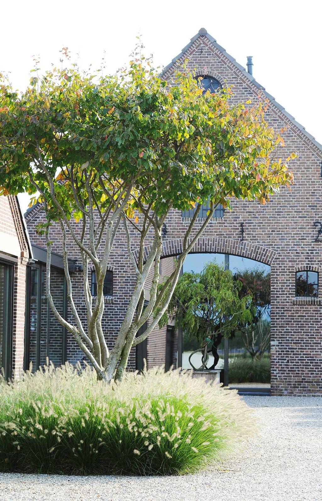 Blog vtwonen Kristel Engelen Meerstammige bomen Hendriks hoveniers