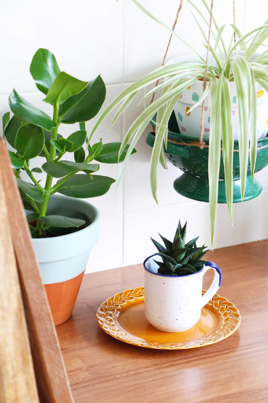 Plant in kopje My Attic