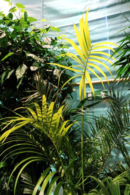 greenhouse festival groen planten