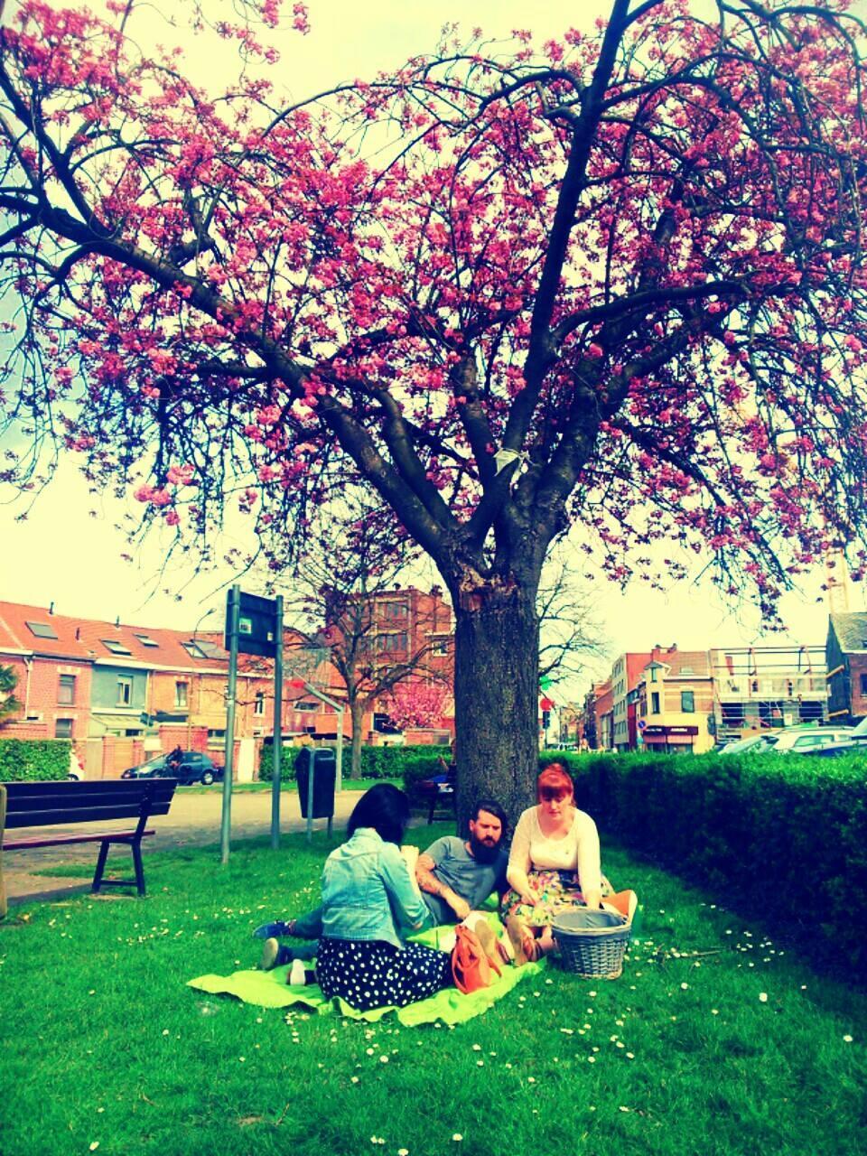 bar stan picknick