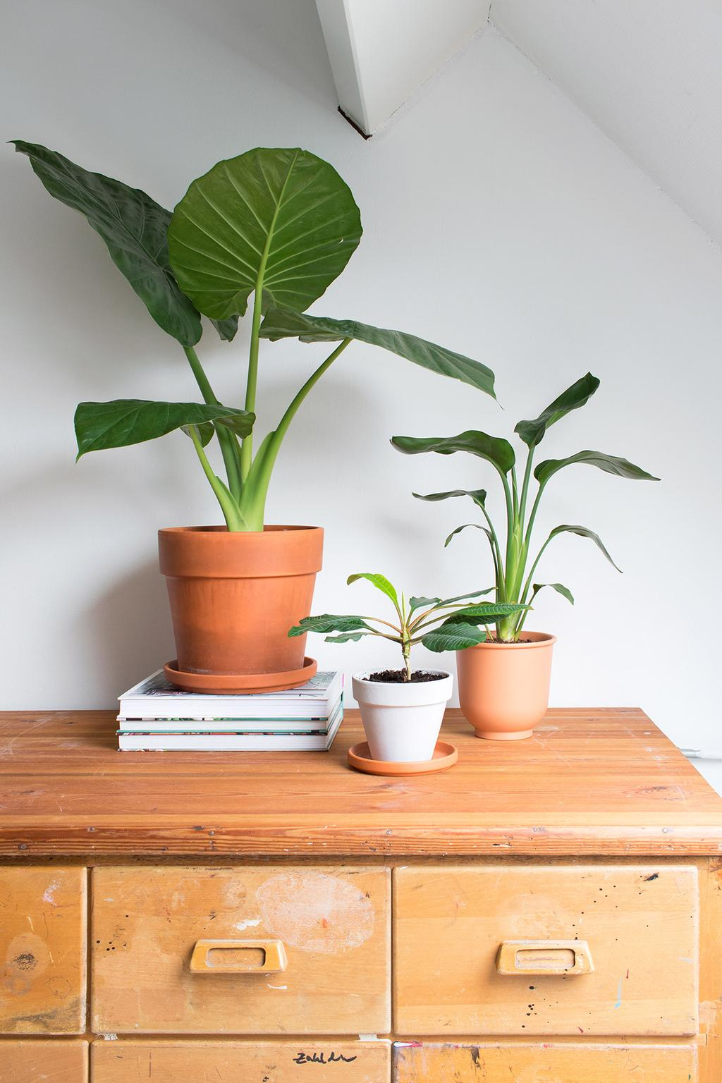 Blog vtwonen My Attic nieuwe planten in huis