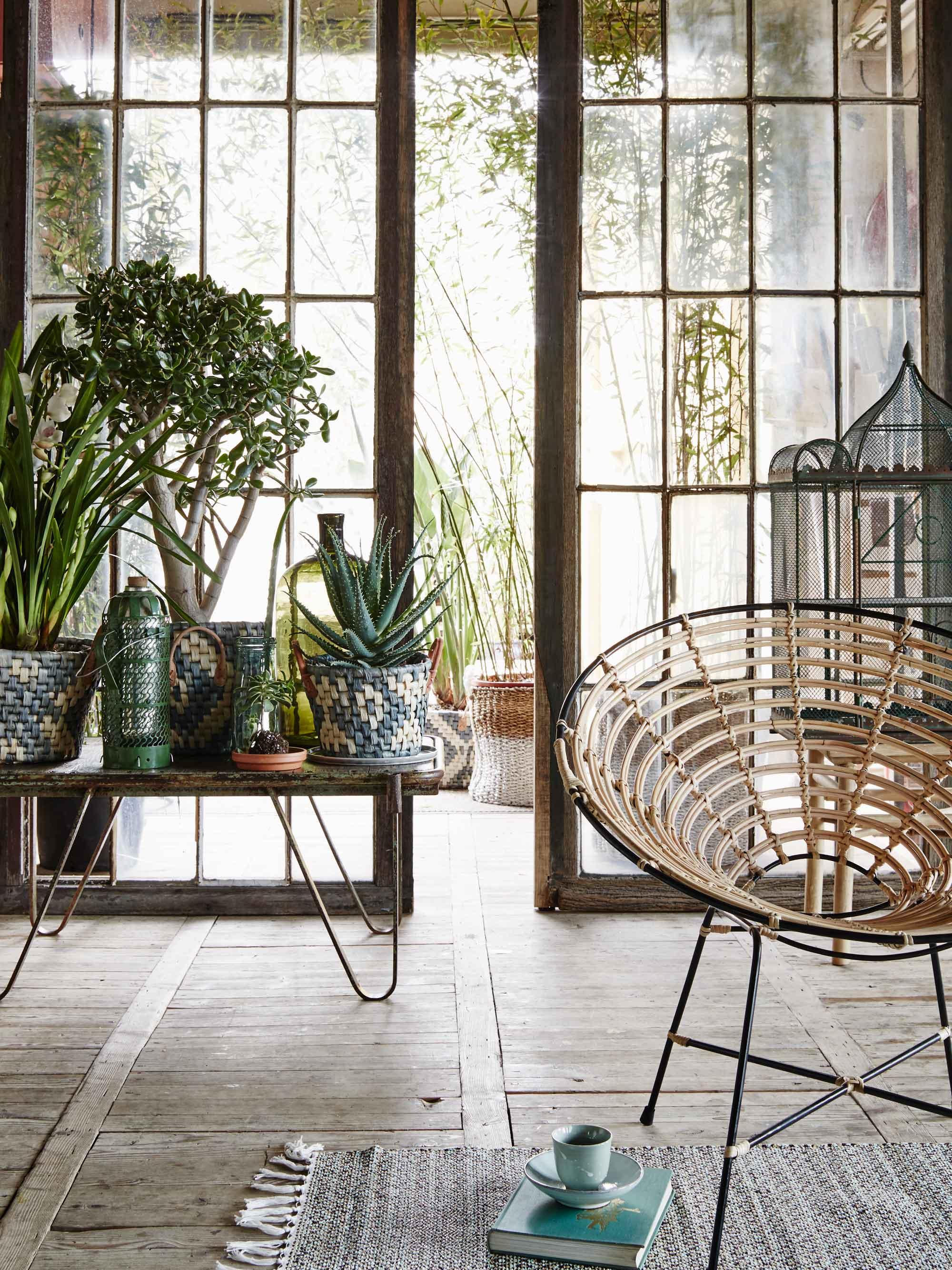 Planten-hoge-ramen