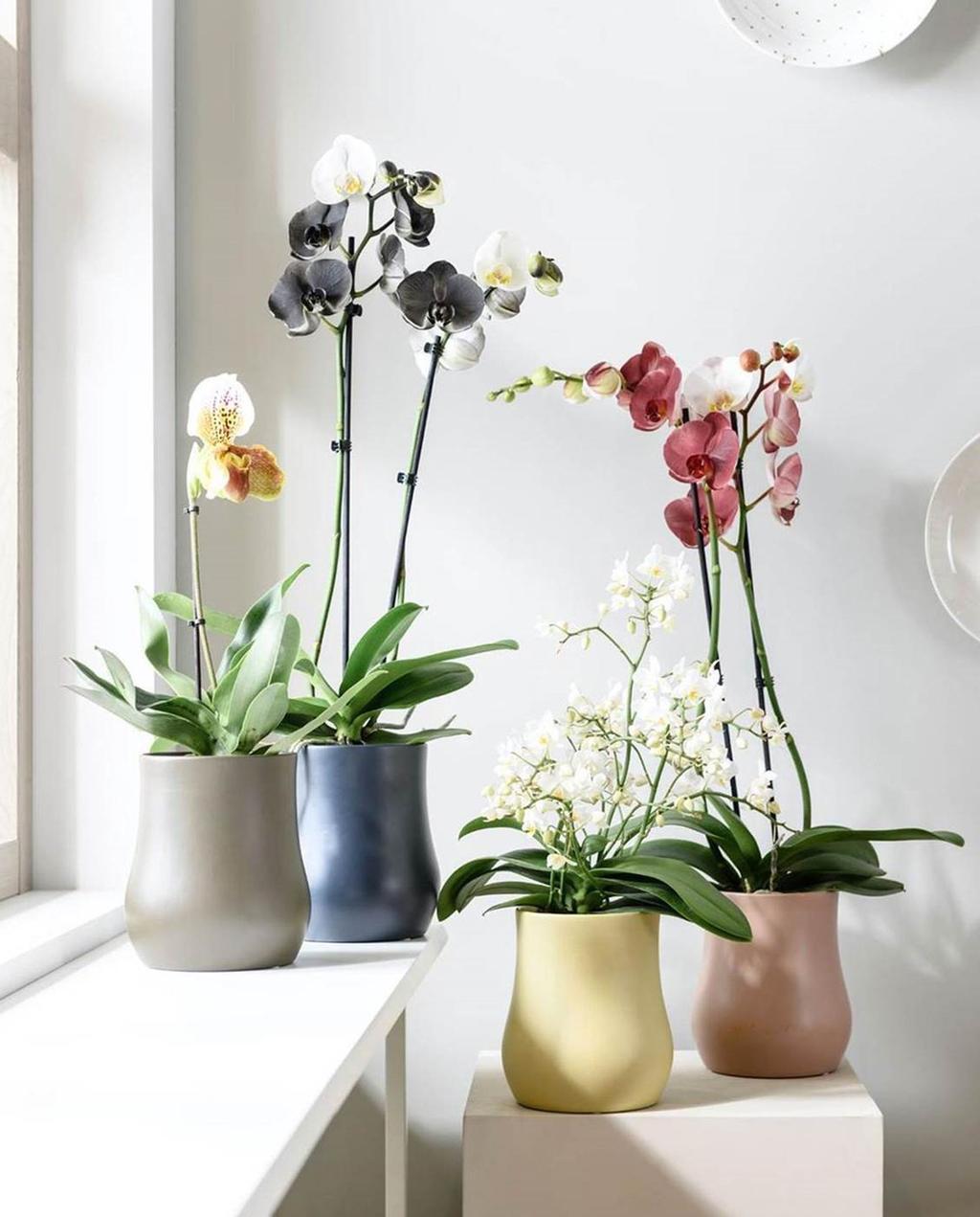 pot en plant collectie | vtwonen | Albert Heijn