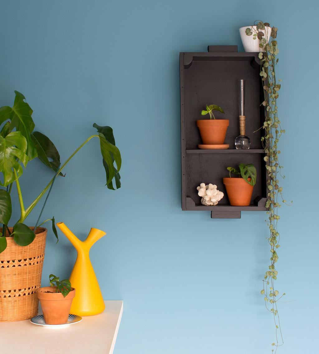 Hangkast voor blauwe muur met planten