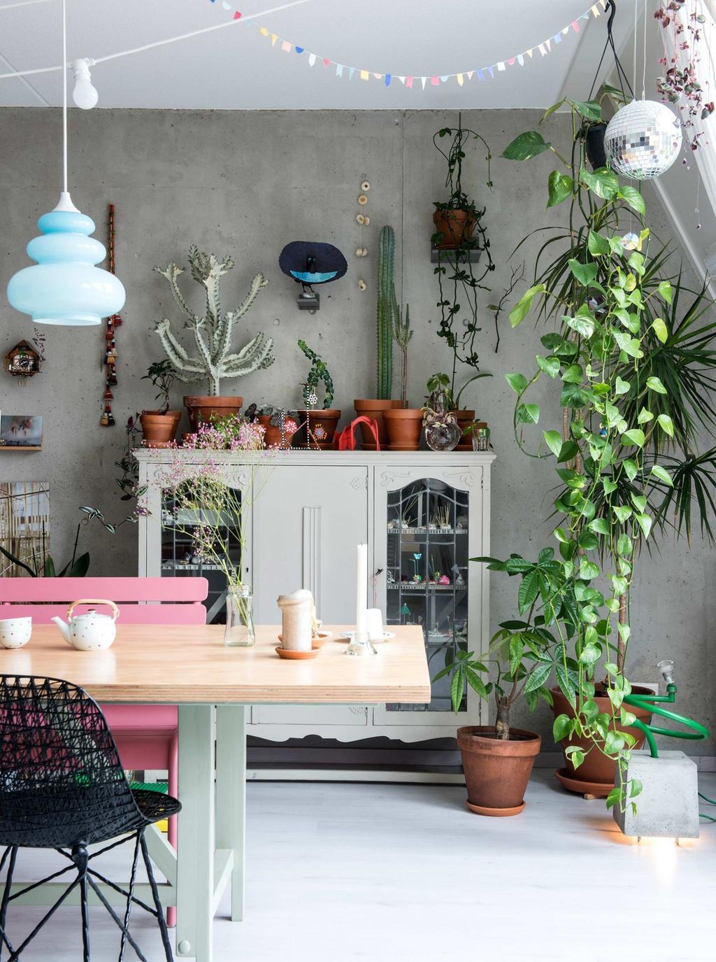 collection plantes buffet blanc