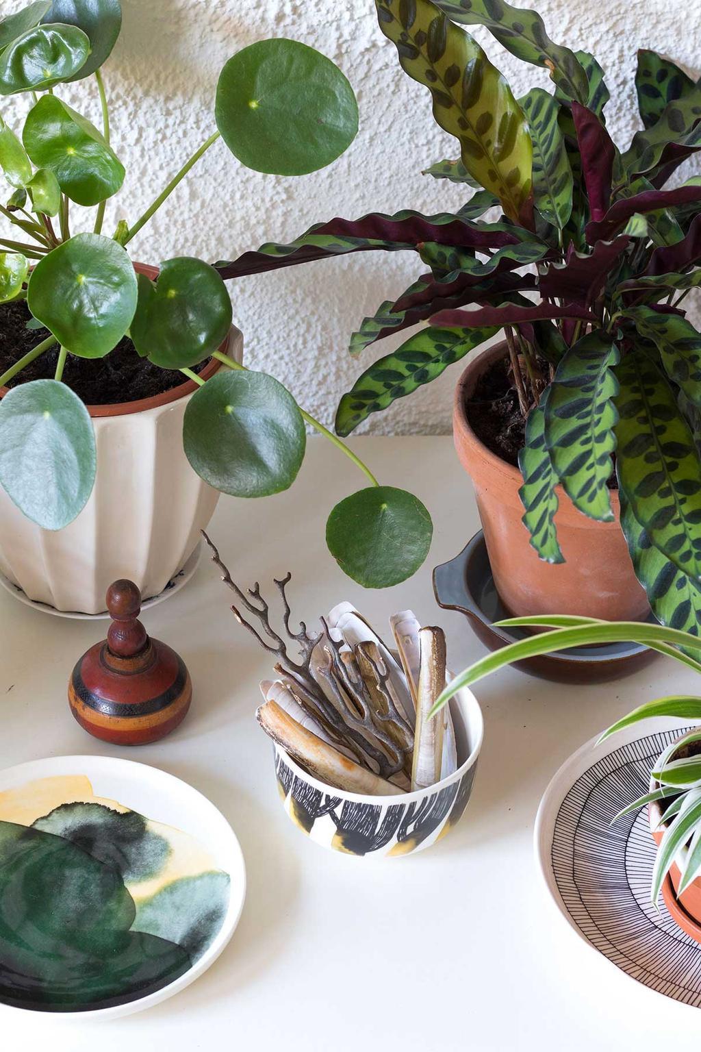 Pilea plant bij MY ATTIC thuis