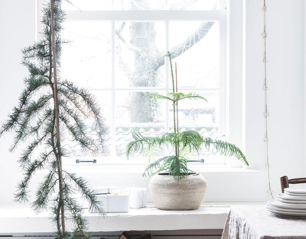 Kozijn zoekt plant | planten voor in het raamkozijn